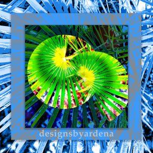 Blue Spider Plants